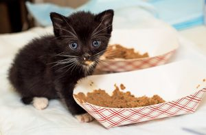 About the details of crude cat food diet